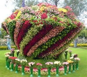 mon jardin fleuri massif de fleurs insolites