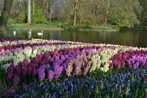 World Largest Flower Garden Pin By Eijkelboom On Travel Guide
