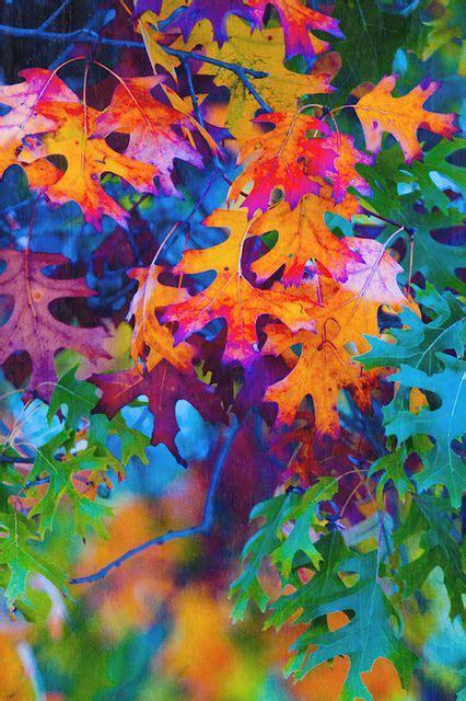 25 best ideas about oak leaves on pinterest oak tree