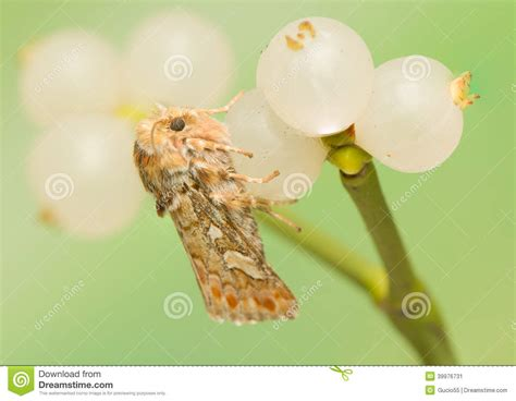 libro the natural world close up panolis flammea stock photo image 39976731