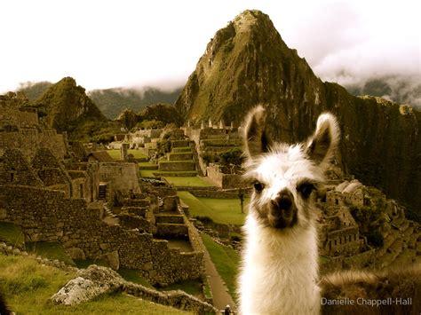 Alpaca Duvet Quot Baby Alpaca At Machu Picchu Quot By Danielle Chappell Hall