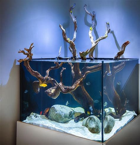 aquarium design ken 21 best hardscape aquariums images on pinterest