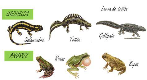 imagenes animales anfibios anfibios con ciencia