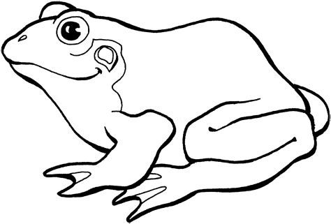 Free Frog Coloring Pages Coloring Page Of A Frog