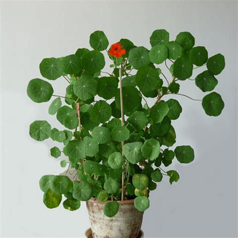 edible climbing plants buy wholesale edible insects from china edible