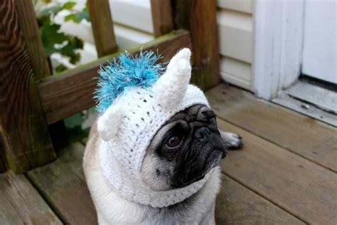 pug in unicorn costume pug in unicorn costume so pug stuff