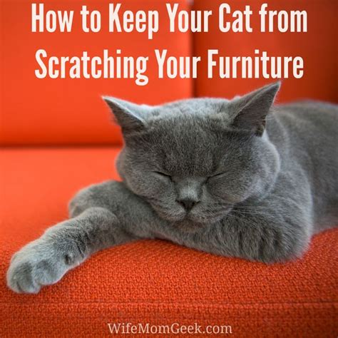 stop cat scratching leather sofa how to stop a cat from