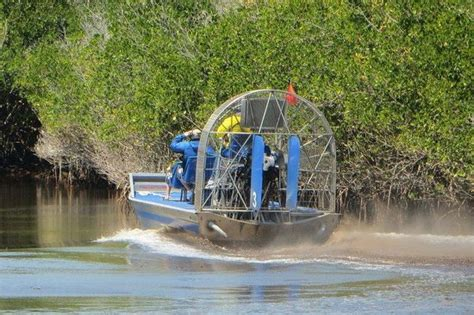 airboat speed mangroove trees in everglades city picture of everglades