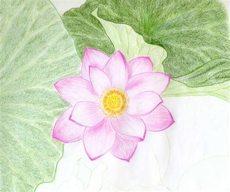 Drawing Flowers by Drawings Of Flowers
