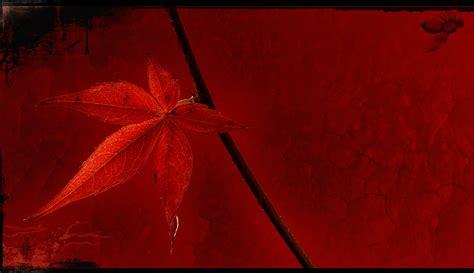 Bilder Roten by Rotes Blatt Foto Bild Natur Kreativ Aufnahmetechniken