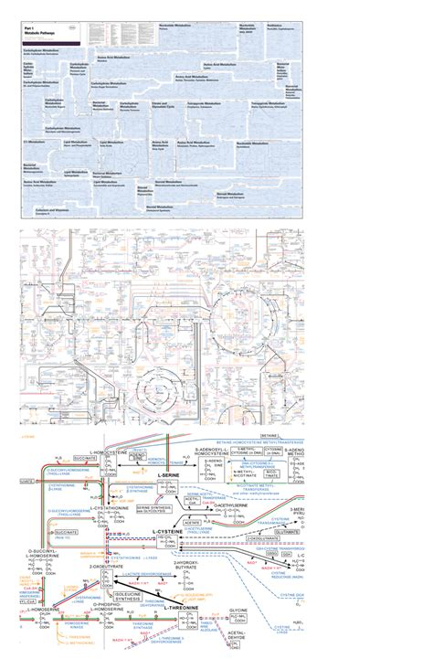 Bio Chemical biochemical pathways poster roche www imgkid the