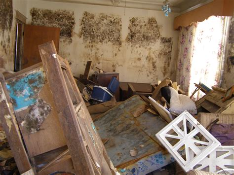 side effects of mold in house no mold is good mold 187 the island eye news