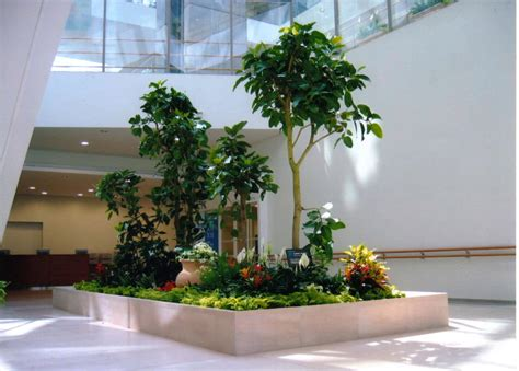 portfolio of interior plants and indoor landscapes in nh