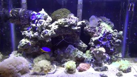 saltwater aquascape saltwater reef tank youtube how to aquascape a saltwater