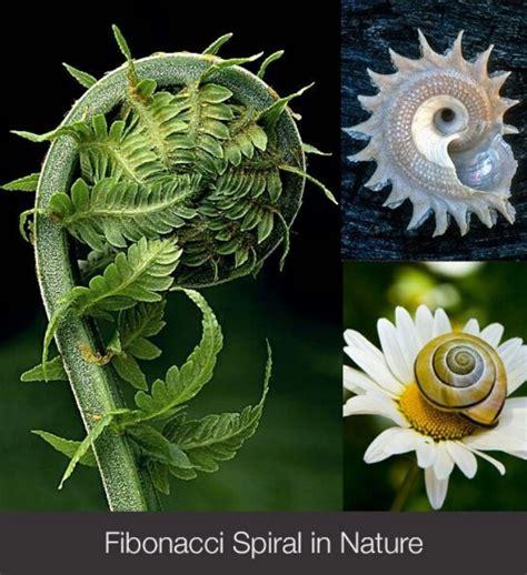 Patterns In Nature Explained | best 25 fibonacci spiral ideas on pinterest fibonacci
