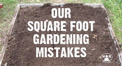 Square Foot Gardening Mistakes   Learn from Ours First