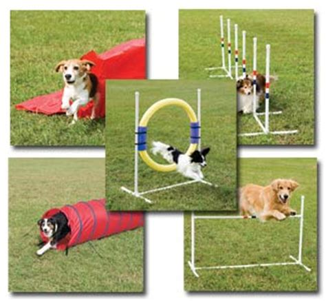 agility equipment for dogs create your own canine agility course