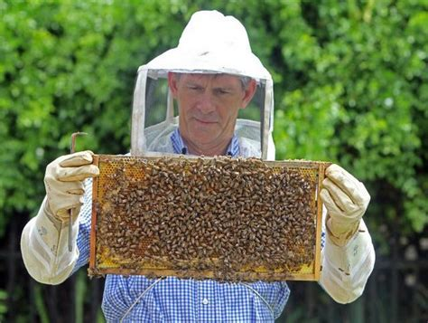 Ross Background Check Florida Fights To Save Dwindling Honeybees Miami Herald Miami Herald