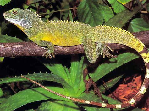 imagenes animales reptiles reptiles hermosos animales taringa