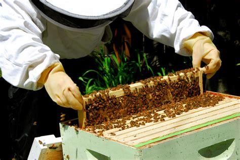 backyard beekeepers backyard beekeeping oakland north