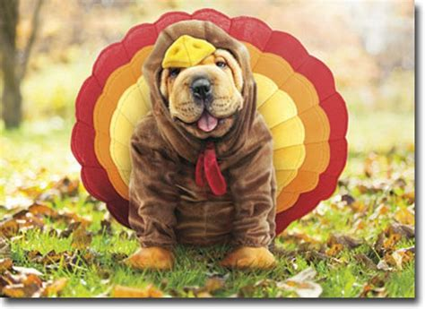 thanksgiving puppy thanksgiving and cat tag for cat pictures for thanksgiving happy turkey