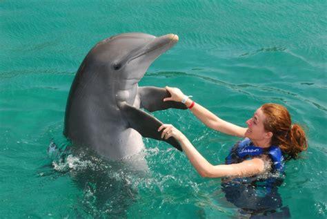 comment faire le ménage 544 r 234 vez vous de nager avec les dauphins archzine fr