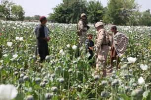 Opium opium poppy seeds images amp pictures becuo