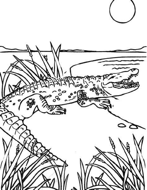 coloring sheet of alligator alligator color page az coloring pages