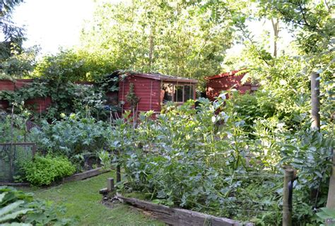 forest backyard edible forest gardens about forest gardening autos post
