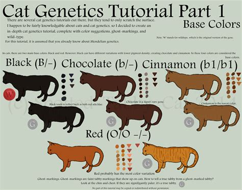 what color are cats cat genetics tutorial part 1 base colors by spotted