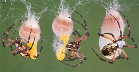 how to keep spiders away from your bed how to keep unwanted spiders away from your home