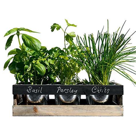 viridescent indoor herb garden kit kitchen wooden