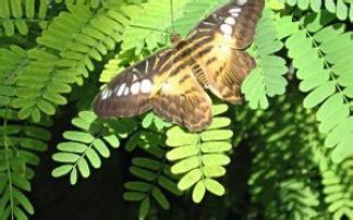 botanischer garten kindergeburtstag botanischer garten augsburg mamilade ausflugsziele