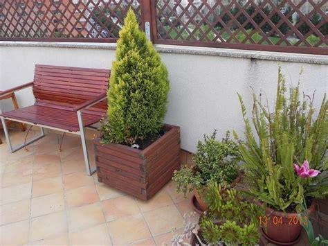 alberelli da vaso alberi da terrazzo piante da terrazzo alberi per il