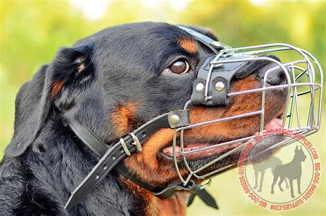 rottweiler cage size buy adjustable wire cage american bulldog muzzle for walking