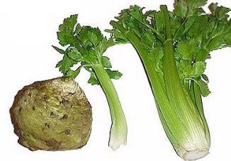 is celery a root vegetable celery description celery cook celery recipes celery