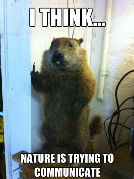 Nature Meme - vanilla and strawberry flavor comes from a beaver unreal