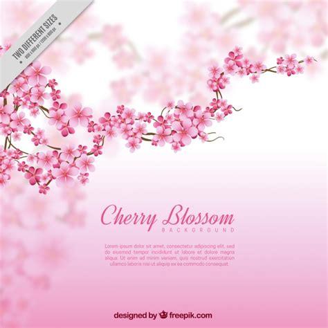 sfondi fiori di ciliegio sfondo sfocato con filiali e fiori di ciliegio scaricare