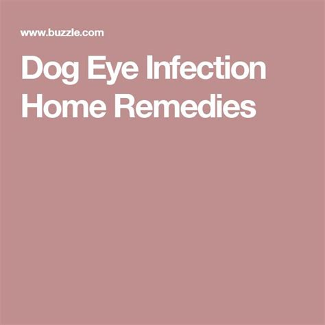 pug eye infection eye infection home remedies home and eye infections