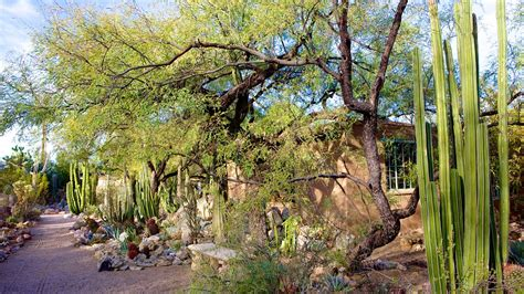 Gardening In Tucson by Tucson Botanical Gardens Tucson Arizona Attraction