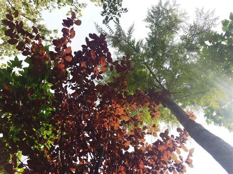 alberi da fiore ornamentali vivaio v i p garden