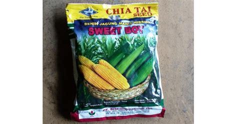 Bibit Jagung Manis Tongkol Besar jual benih jagung manis hibrida sweet boy