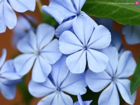 wallpaper flower image free download free download flower wallpapers beautiful flower