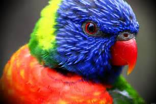 colorful animals colorful parrot hi res nature photo birds
