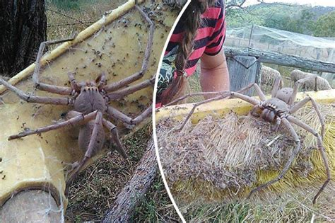 aussie star caught in horrifying lawsuit if you don t like spiders look away this may be the