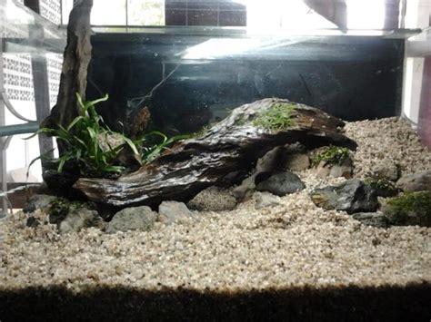 desain kayu aquascape cara membuat aquascape di aquarium dengan cara yang mudah