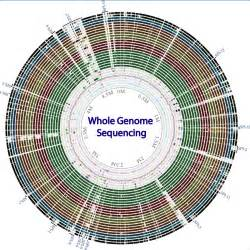 The Genome whole genome sequencing of bacterial genomes tools and