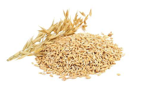 tarifa de sereales 2016 tarirario 2016 de cereales la importancia de los cereales