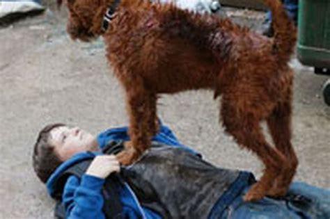fire house dogs firehouse dog mark adams mirror online