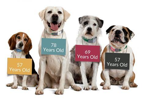 senior dogs is my a senior citizen aspen grove vet